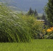 Pestrá záhrada s úžasnými trvalkami na priedomí